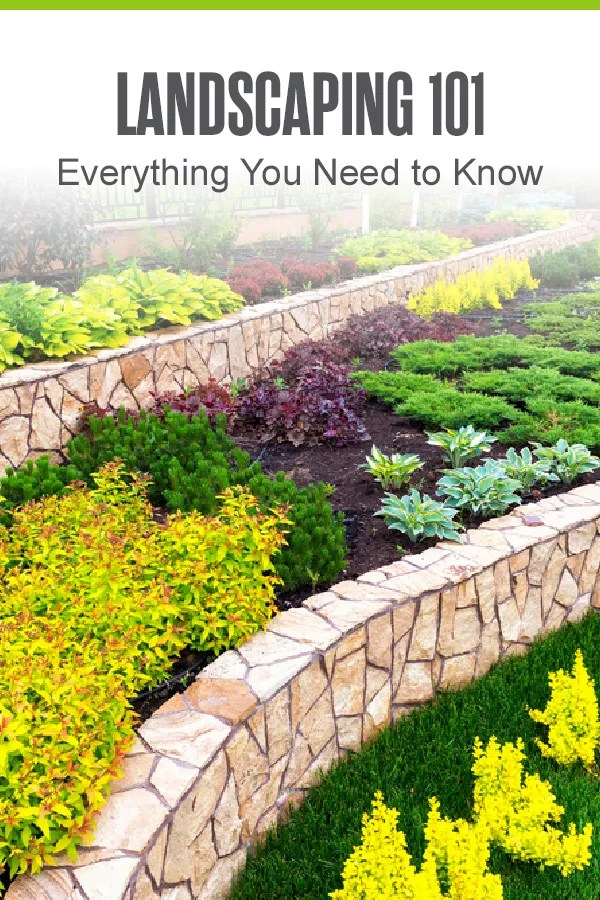 Pinterest Graphic: Landscaping 101: Everything You Need to Know