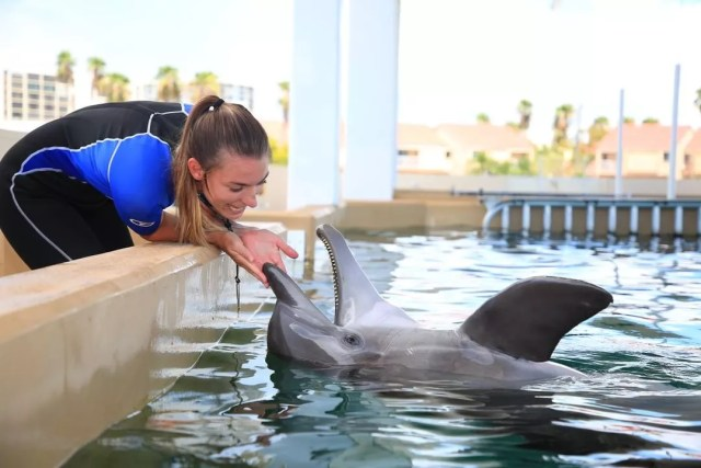 Woman Being Playful with a Dolphin. Photo by Instagram user @cmaquarium