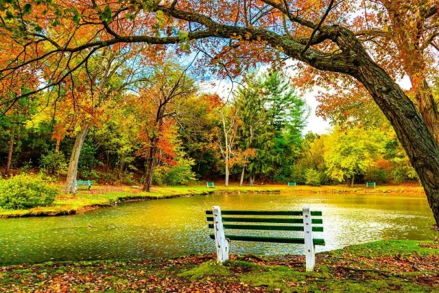Fall in Hamilton Park in Waterbury, CT; the leaves in the treas are red, orange, green, and yellow, and those that have made their way to the ground are the same. The pond is shallow, clean, and makes you want to sit on one of the many benches surrounding it to watch it. Photo by Instagram user @whatmovesyou.photography.