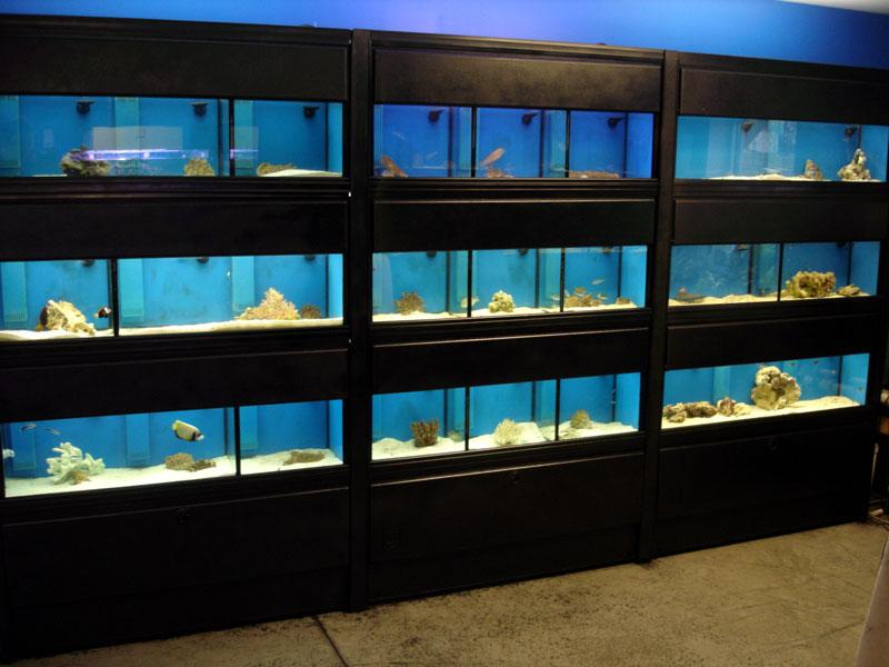 fish room rack design