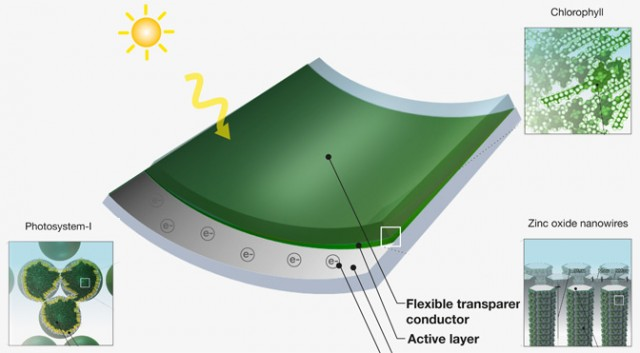 Solar power from grass (photosystem solar harvesting chip)