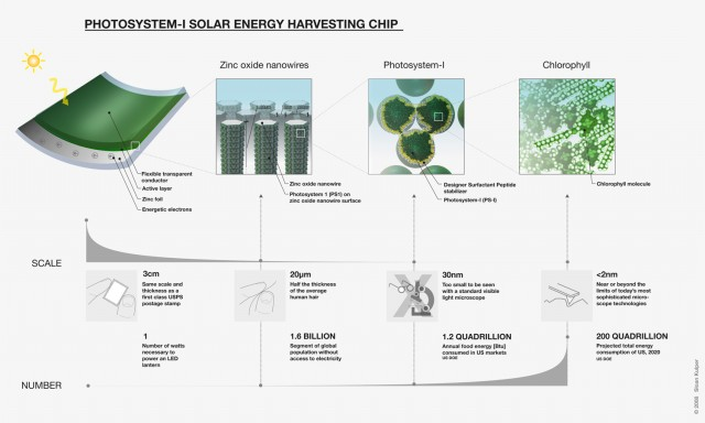 Photosystem I solar harvesting infographic