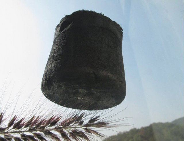 Another shot of the graphene aerogel, balanced on the spine of a plant.