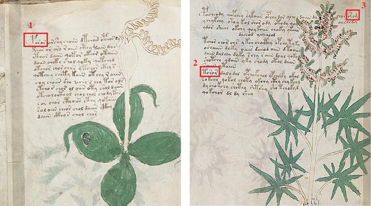 Finding proper nouns in the Voynich Manuscript