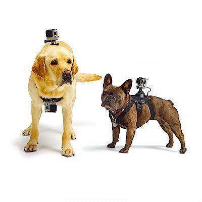 accesorios gopro arnes perro