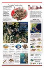 lionfish-poster
