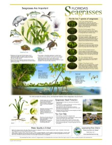 seagrasses_poster_8-5x11