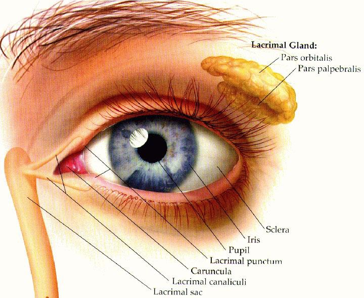 Eyech3 H Html