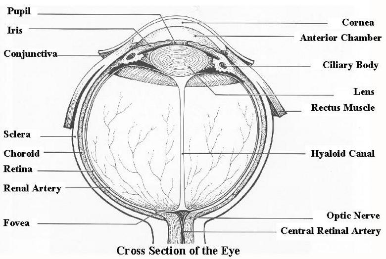 photo eye electrical diagram