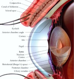 human eye anatomy the eye si gh t printable anatomy worksheets printable eye worksheet [ 742 x 1324 Pixel ]