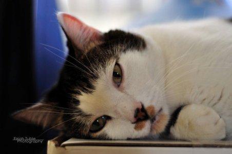 cat Twylah