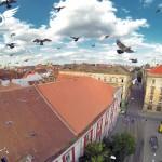 Stol de porumbei in Piata Libertatii din Timisoara