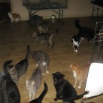 Severna Park Cat Rescue Organization Raided By Animal Control