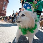 St. Paddy's Day festivities in Annapolis