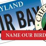 Name A Chesapeake Bay Icon And You Could Be A Winner
