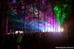 The Dance Forest comes alive at night