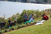 Community members planting the hillside garden with funds provided by Unity Gardens.