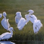 "McBride Gallery: ""Best of the Chesapeake"""