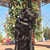 K9 Spice wishes everyone a Merry Christmas