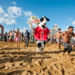 Jump in the Bay, in January? Sure thing for the Maryland Spacial Olympic Polar Bear Plunge