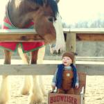 Enter for a chance for a one-on-one meeting with the Budweiser Clydesdales after the Military Bowl