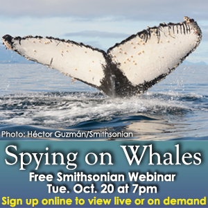 SERC Whale Webinar_Eye On Annapolis