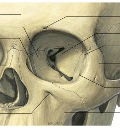 lateral canthal tendon attaches the the tarsal plates of the eyelid to the periosteum at the [ 1500 x 943 Pixel ]
