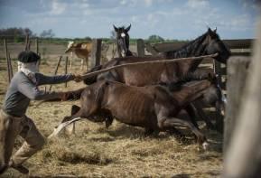 05.10.2012_CH.SG.03_Beladung in La Banda_dünnes Pferd