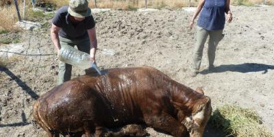 On-going project: Reducing animal-suffering in Turkish slaughterhouses
