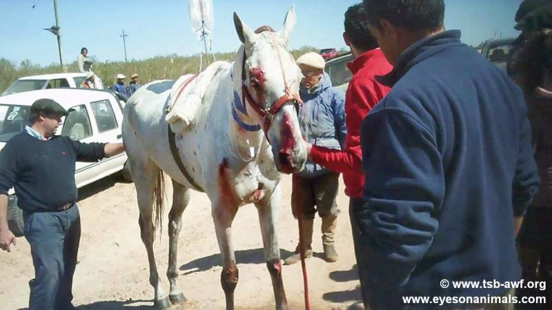 cruel reality behind imported horse meat 1