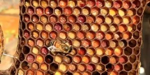 Ever wonder if there's a bee Picasso inside your hive?