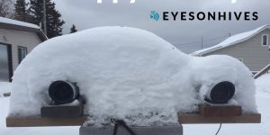 Two Eyesonhives bee monitor devices covered in snow