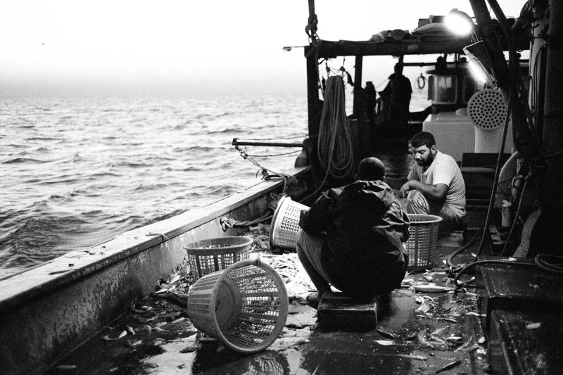 Kuwait Arabic gulf: sorting the fish immediately after harvesting