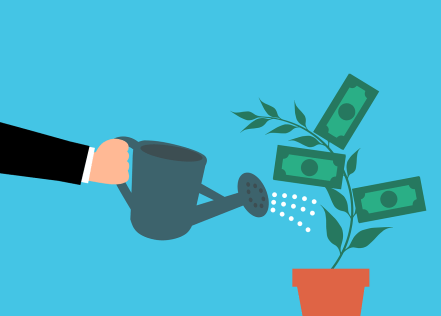 money tree in a plant pot being watered