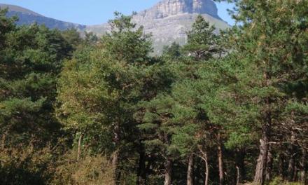 Sierra Salvada: conflictos entre alaveses, burgaleses y vizcaínos (I)