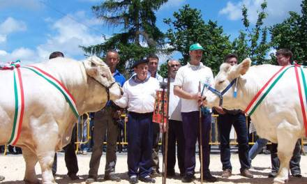 «˜Fier' y «˜Acadie' vencen en la feria de ganado de Orduña