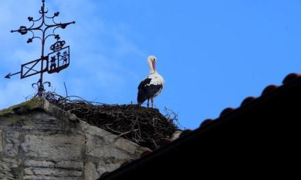 El cambio climático adelanta el regreso de las cigüeñas a Orduña