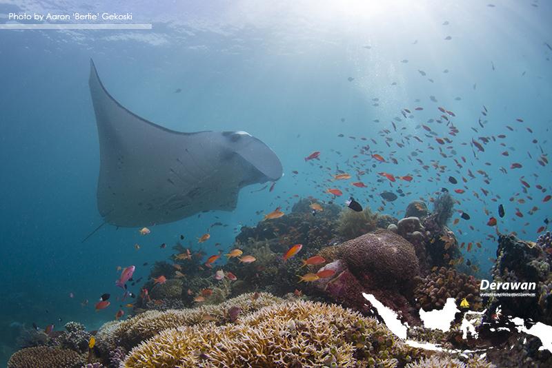 Deserted Diving in Derawan