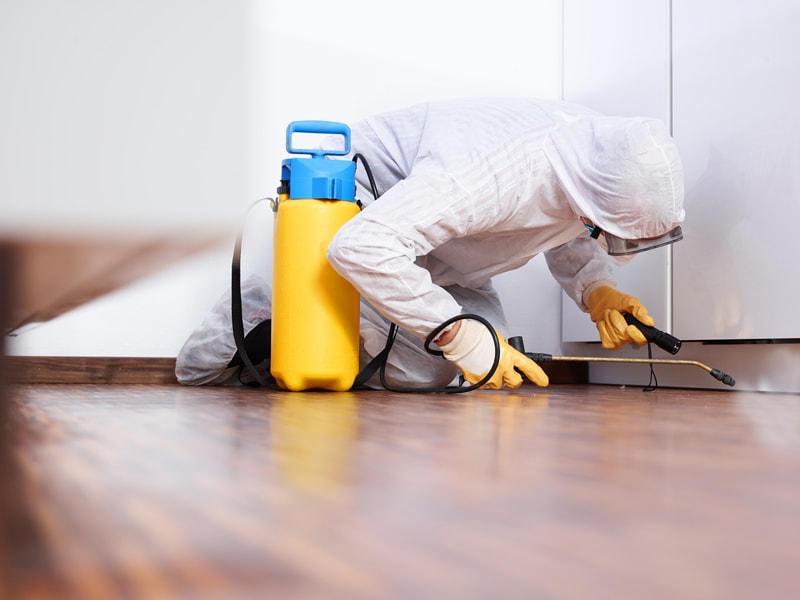 https://i0.wp.com/www.ezhomeservices.in/images/pest-control.jpg