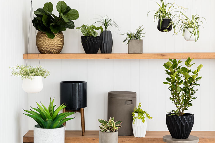 House Plants In Your Home Life Style Your Way