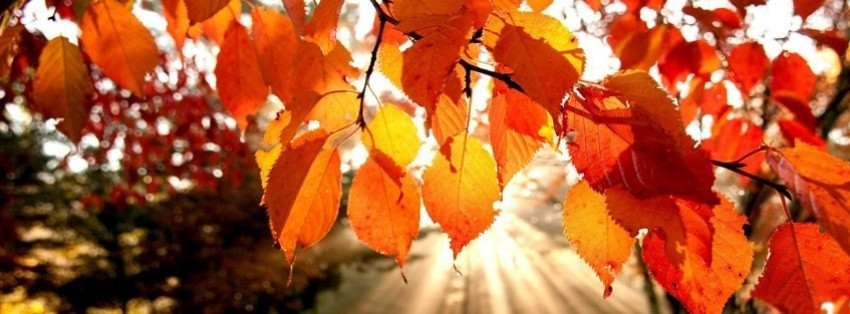 November Fall Wallpaper For Computer Autumn Leaves Facebook Cover Timeline Photo Banner For Fb