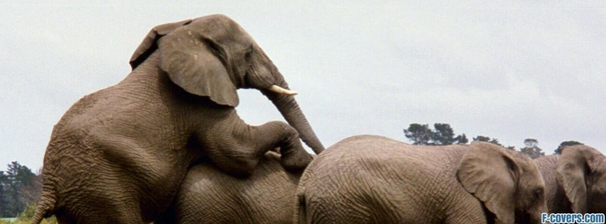 Sad Love Quotes Wallpaper Elephant Facebook Cover Timeline Photo Banner For Fb