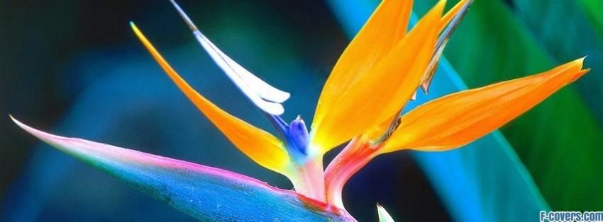 Cute Poppy 1080p Wallpaper Flowers Bird Of Paradise Strelitzia Crane Flower Facebook