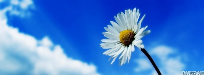 Stars Wallpaper With Quotes Flowers Daisy Facebook Cover Timeline Photo Banner For Fb