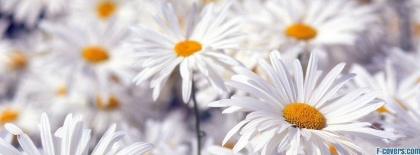 Cute Hipster Desktop Wallpaper Flowers Daisy 4 Facebook Cover Timeline Photo Banner For Fb