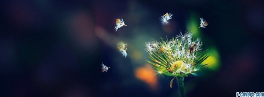 Emo Wallpapers With Quotes Dandelion Facebook Cover Timeline Photo Banner For Fb