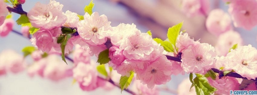 Field Hockey Hd Wallpapers Flowers Pink Blossoms Facebook Cover Timeline Photo Banner