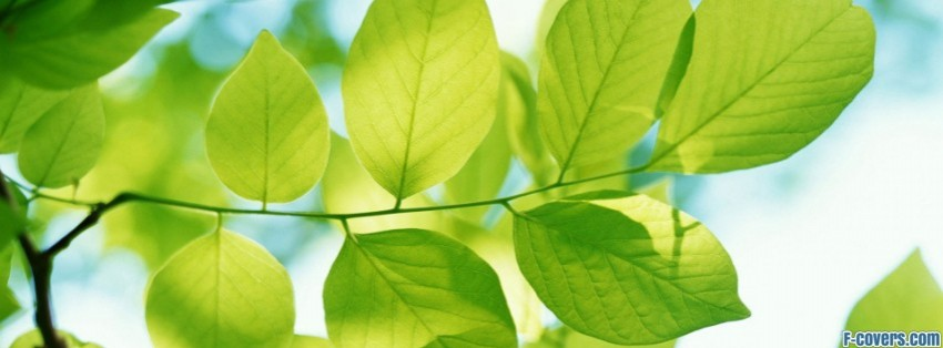 Green Leaves Facebook Cover Timeline Photo Banner For Fb