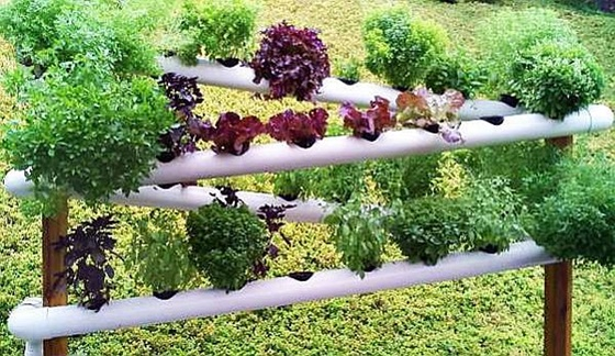 DIY PVC Gardening Ideas And Projects