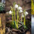 Der Frühling…